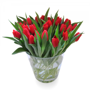 Cherry rode tulp